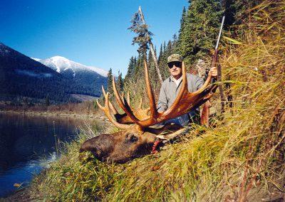 Full Grown Moose