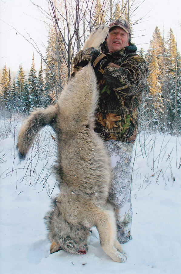 Timber Wolf and Trapline Adventures with McGregor River Outfitters